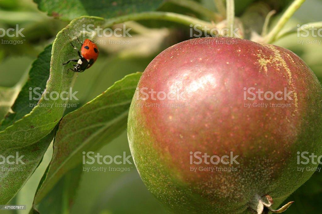 Summer Fruit stock photo