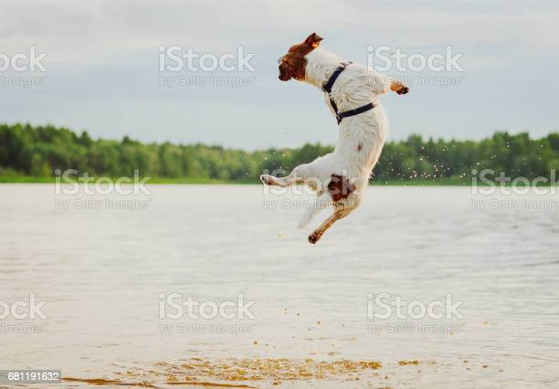 Summer fun at beach with dog jumping high in water picture id681191632?b=1&k=6&m=681191632&s=612x612&h=s7jqjcal mzgupy0nd9hgcxmpcdyncvpecsa lojoi8=