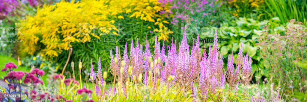 Summer garden panorama stock photo