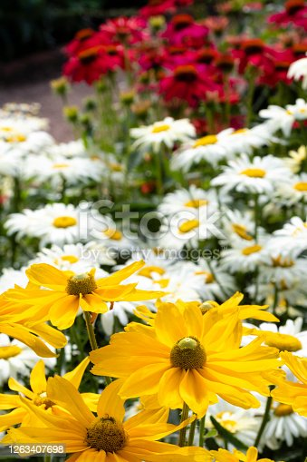 Black-eyed Susans, Daisies, and Coneflowers in a summer garden