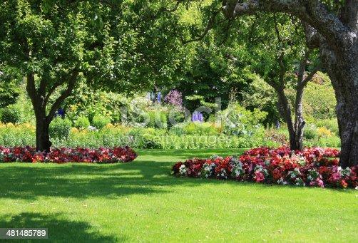 istock Summer garden 481485789