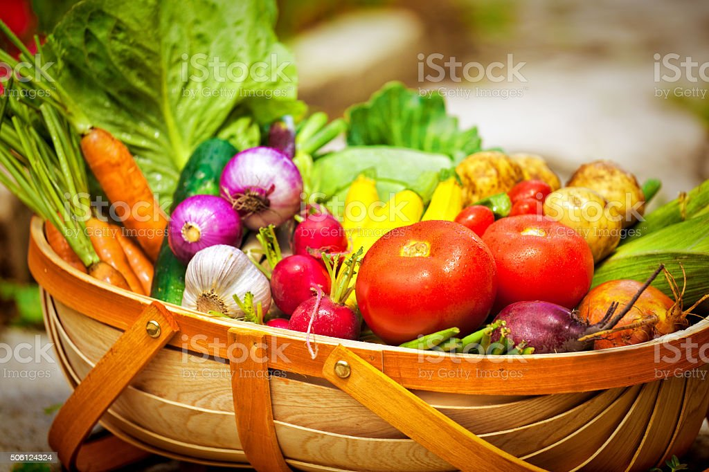 Still life close-up of a variety of freshly harvested vegetables in a...