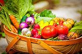 Summer Gardening Harvest of Fresh Vegetables in Market Basket
