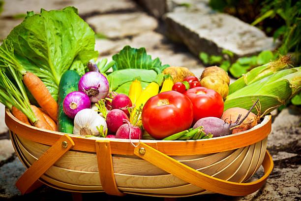 sommer garten harvest von frischem gemüse korb im markt - knoblauchkartoffeln stock-fotos und bilder