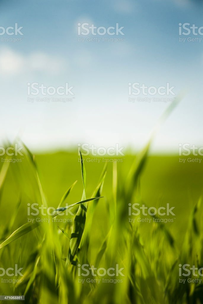 Summer Grass Detail royalty-free stock photo