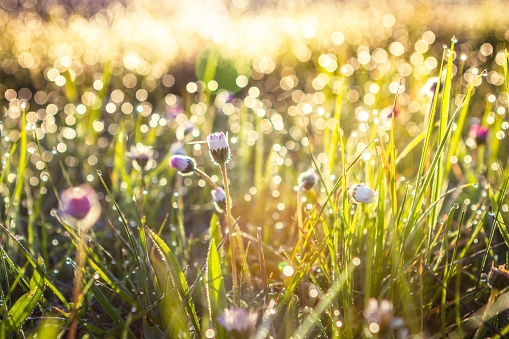 Summer grass field with flowers, abstract background concept, soft focus, bokeh, warm tones