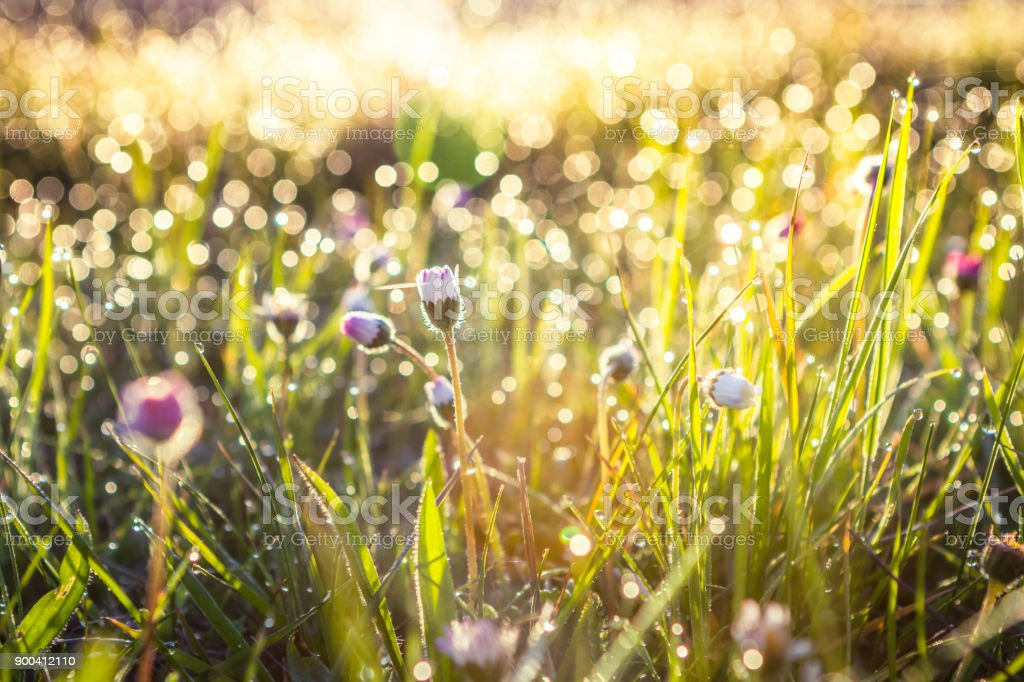 Summer grass field with flowers, abstract background concept, soft focus, bokeh, warm tones stock photo