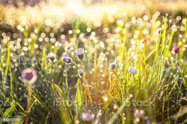 Photo of Summer grass field with flowers, abstract background concept, soft focus, bokeh, warm tones