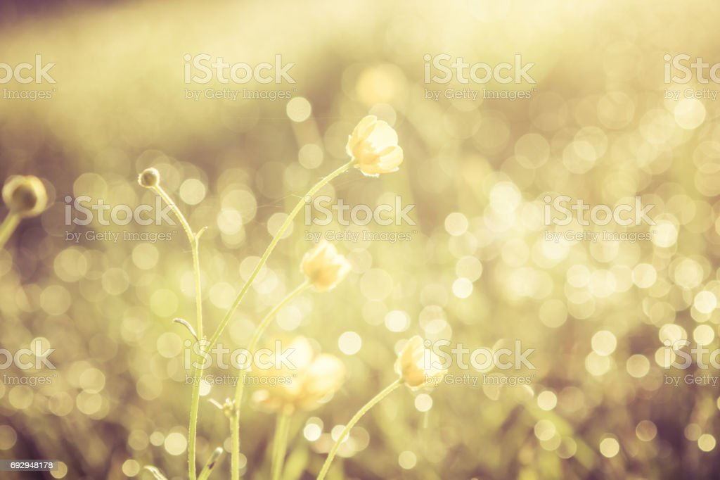 Summer grass field with flowers, golden abstract background concept, soft focus, bokeh, warm tones