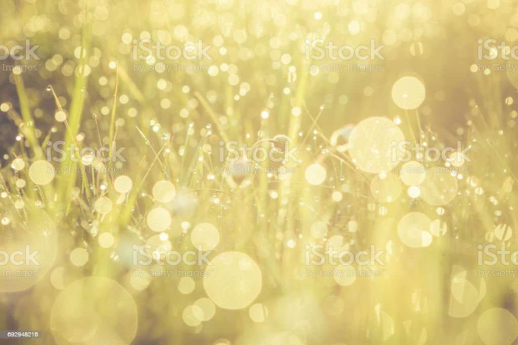 Summer grass field with flowers, golden abstract background concept, soft focus, bokeh, warm tones stock photo