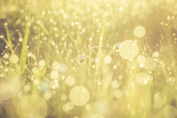 summer grass field with flowers, golden abstract background concept, soft focus, bokeh, warm tones - soft focus stock photos and pictures