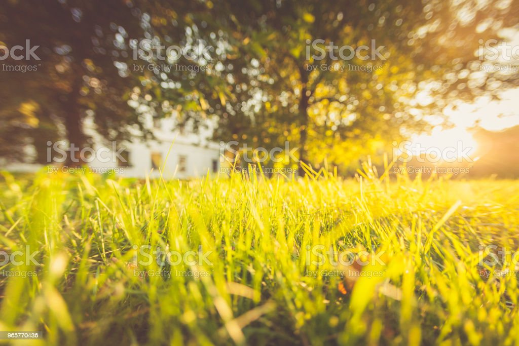 Summer, grass green, sunlight, boke, abstract landscape - Royalty-free Abstrato Foto de stock