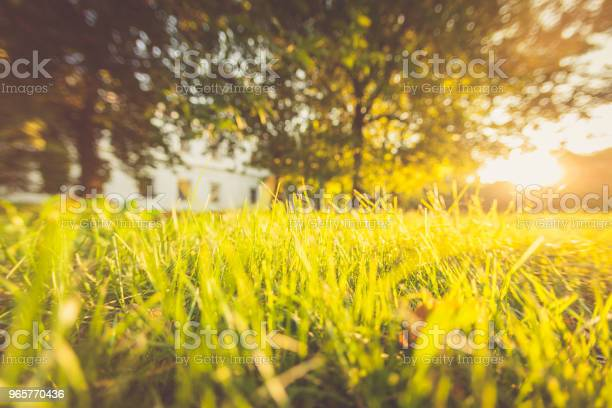 Summer Grass Green Sunlight Boke Abstract Landscape - Fotografias de stock e mais imagens de Abstrato