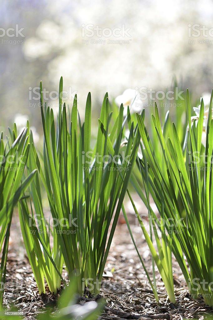 Summer Grass stock photo