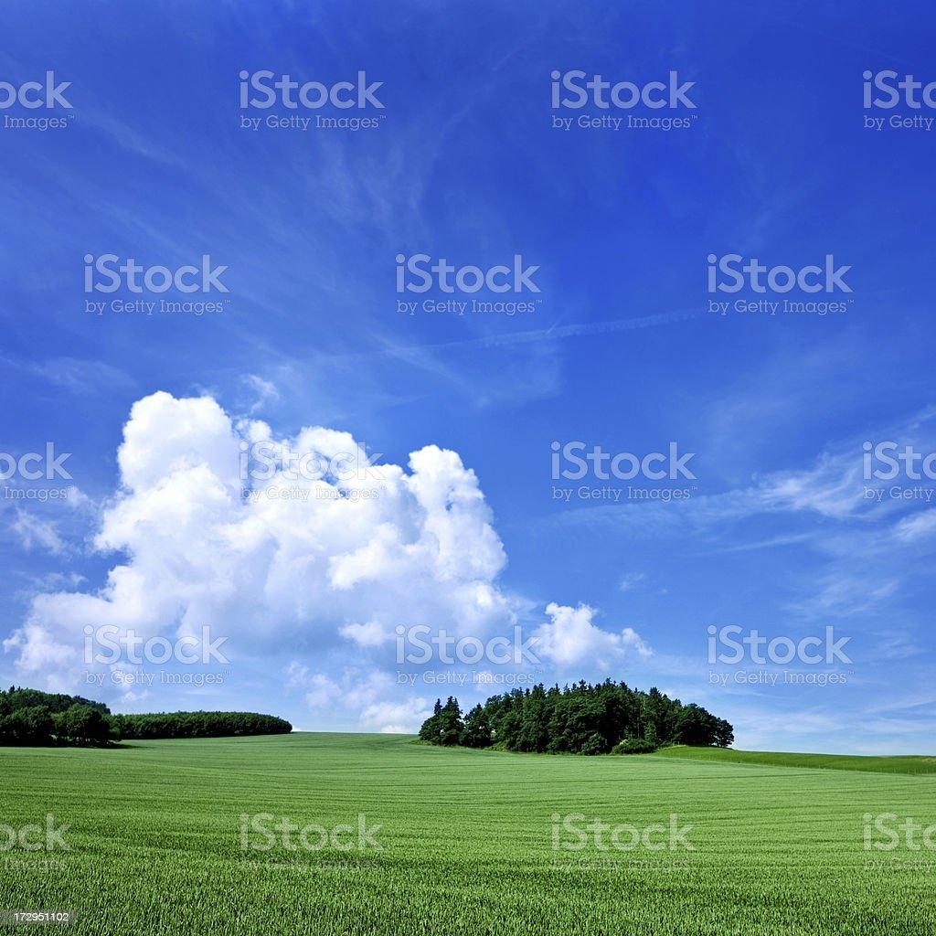 summer grassland royalty-free stock photo