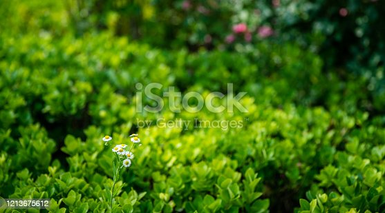 istock Summer green leaves 1213675612