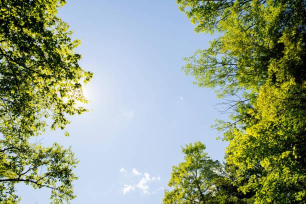 Verano, verde - foto de stock
