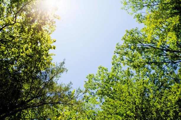 Summer Green stock photo