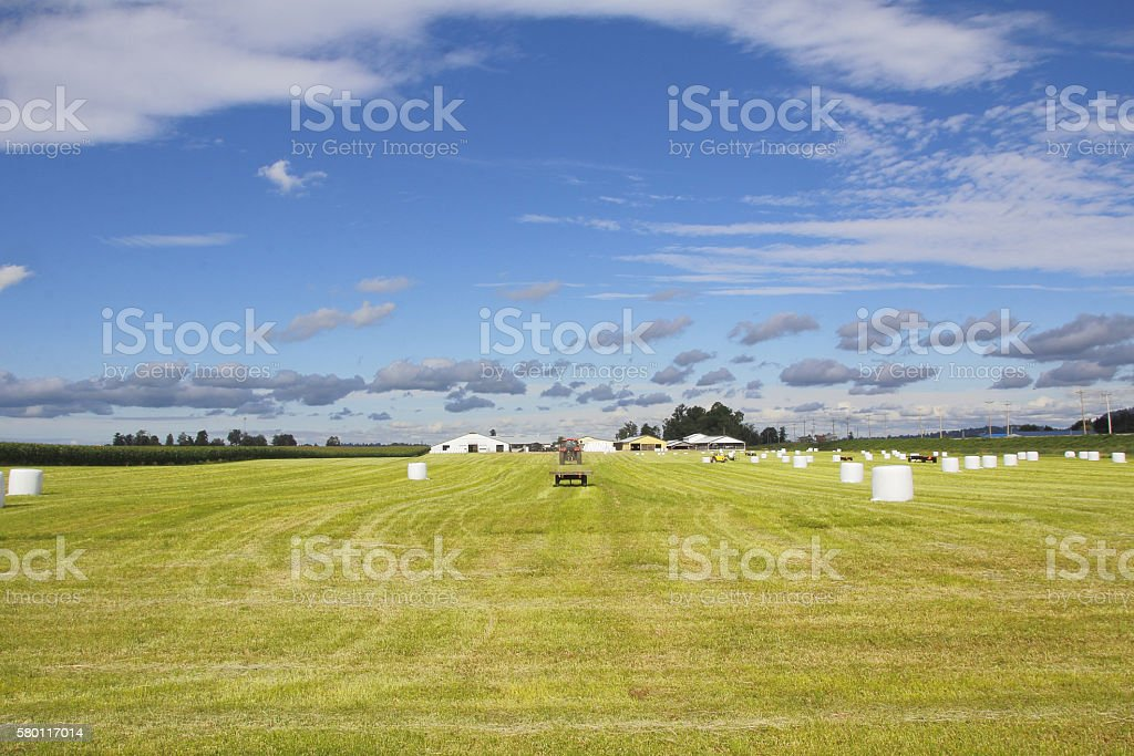 Summer Harvest Time in the Fraser Valley stock photo