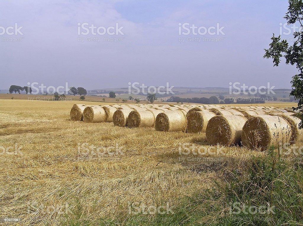 Summer Hay royalty-free stock photo