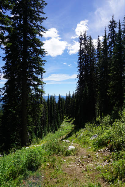 Summer Hiking trail stock photo