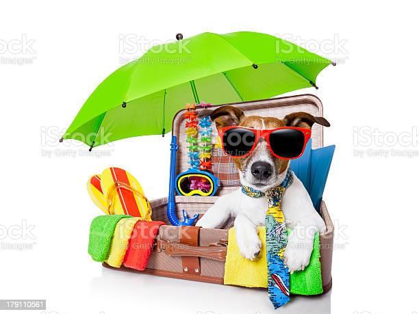 Summer holiday dog picture id179110561?b=1&k=6&m=179110561&s=612x612&h=ybbvvf opmxw5sl7he4wwdshtsyfe jlc04v3ujantq=