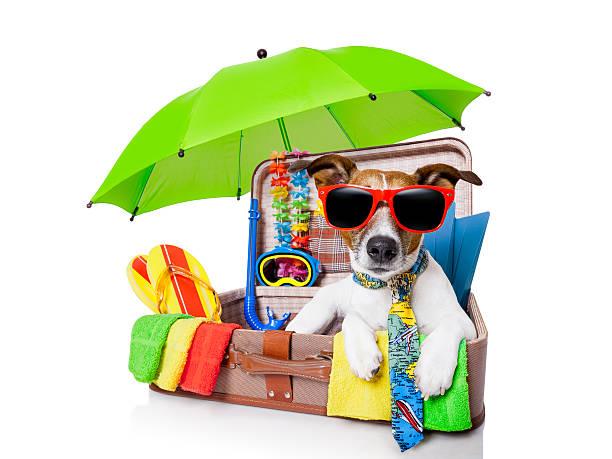 Summer holiday dog picture id179110561?b=1&k=6&m=179110561&s=612x612&w=0&h=267skhkdjpkfhztut8m1fglgpcbpk5 lq6fdn0czy9o=