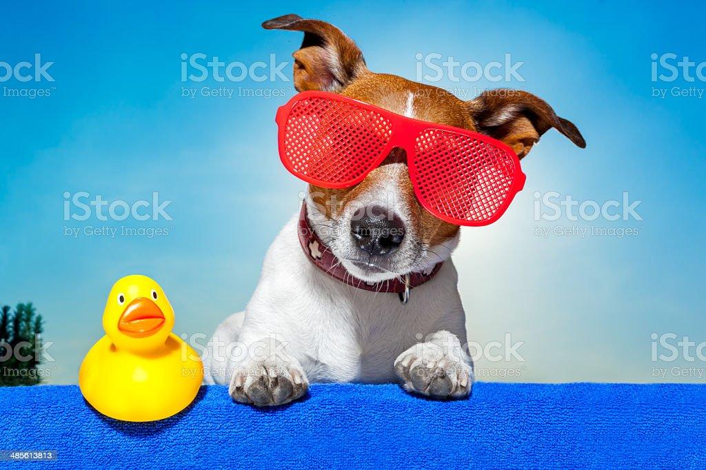 summer holiday dog royalty-free stock photo