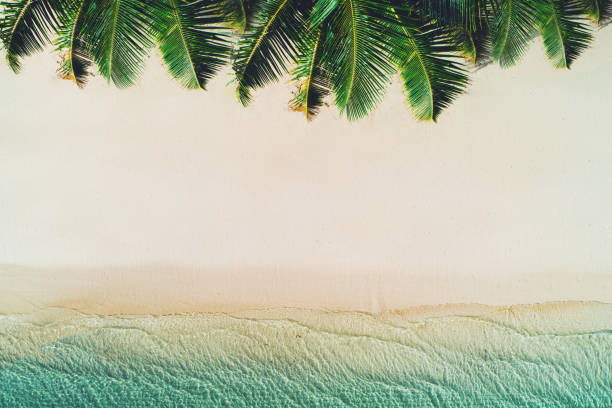 summer holiday on tropical island. palm trees on the beach and sea waves. - bahamas foto e immagini stock
