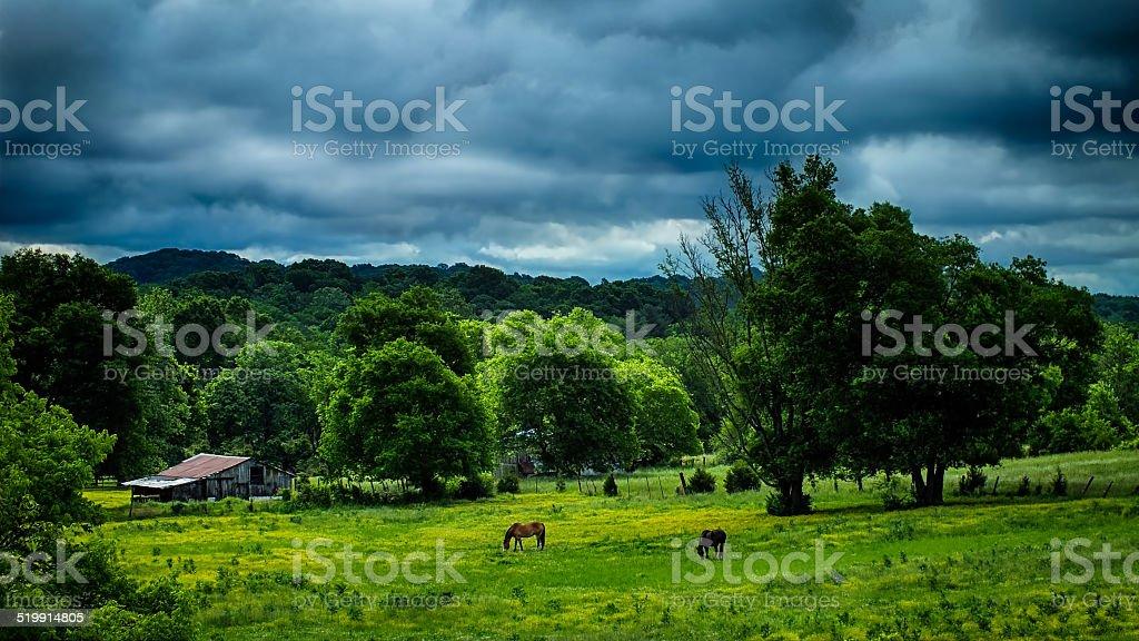 Summer Horse Farm stock photo