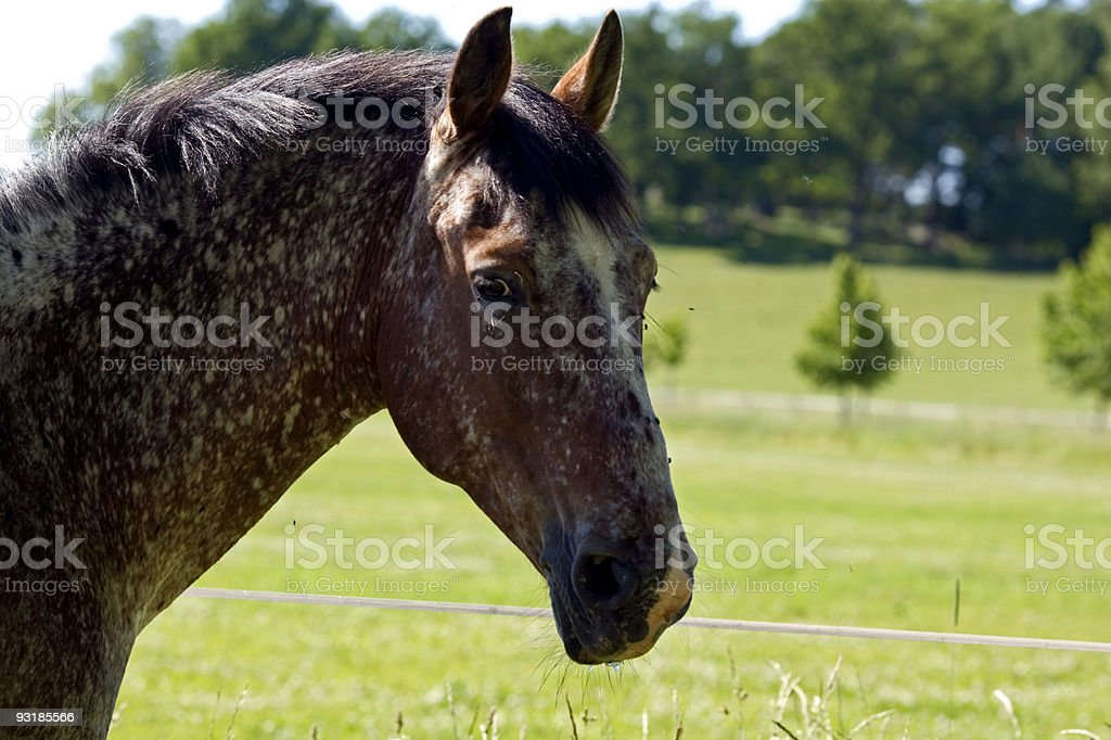 Summer horse royalty-free stock photo