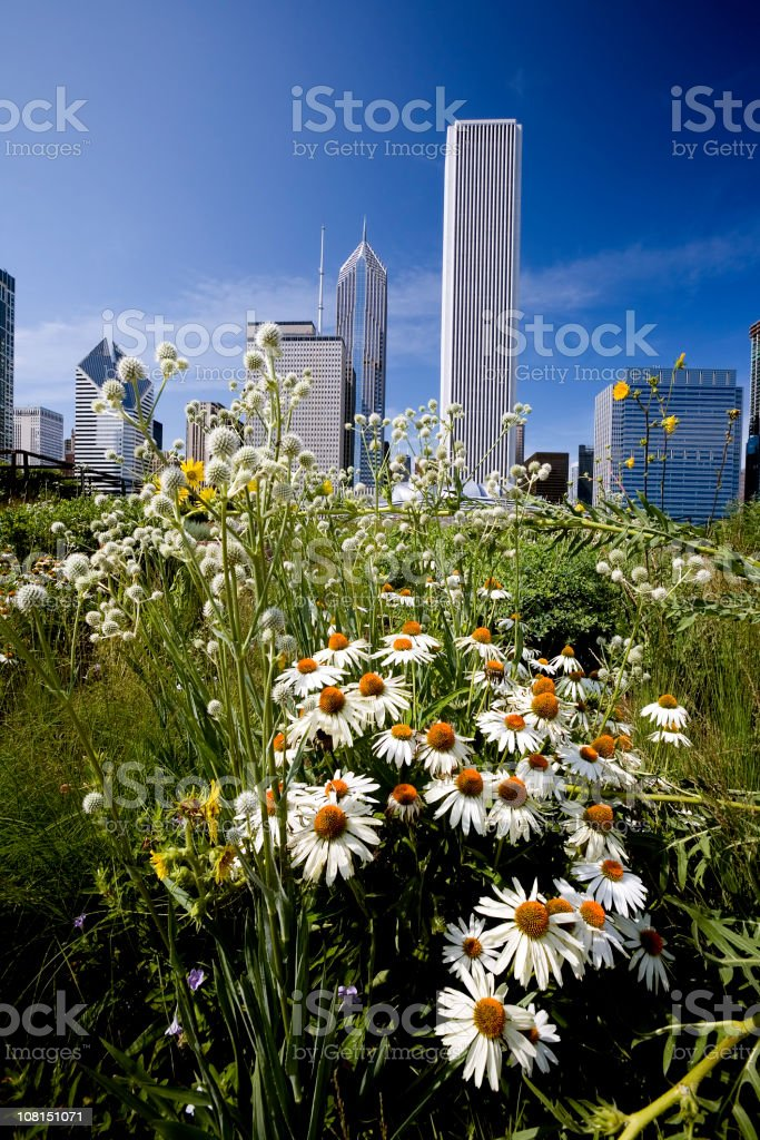 Summer in Chicago royalty-free stock photo