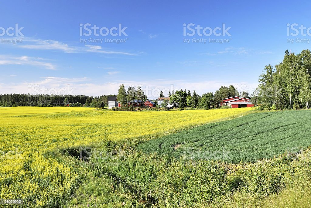Estate in Finlandia foto stock royalty-free