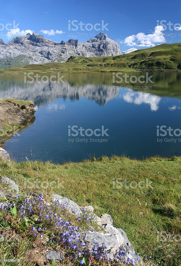 Summer in swiss Alps royalty-free stock photo