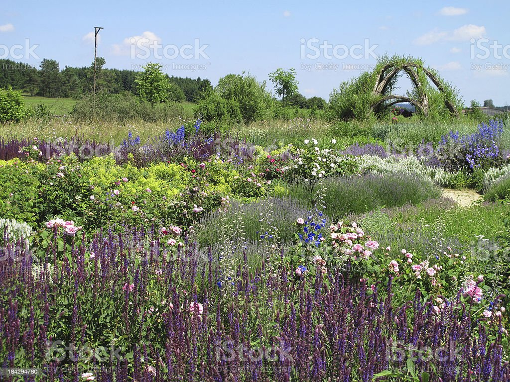 Summer in the herb garden royalty-free stock photo