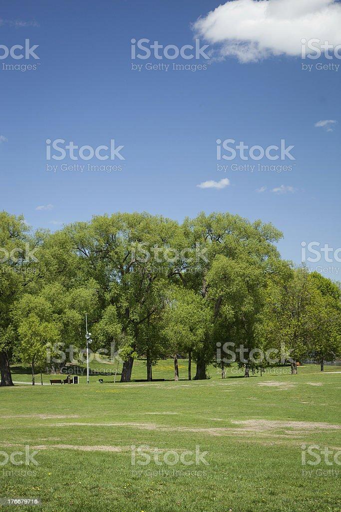 Summer en el parque foto de stock libre de derechos