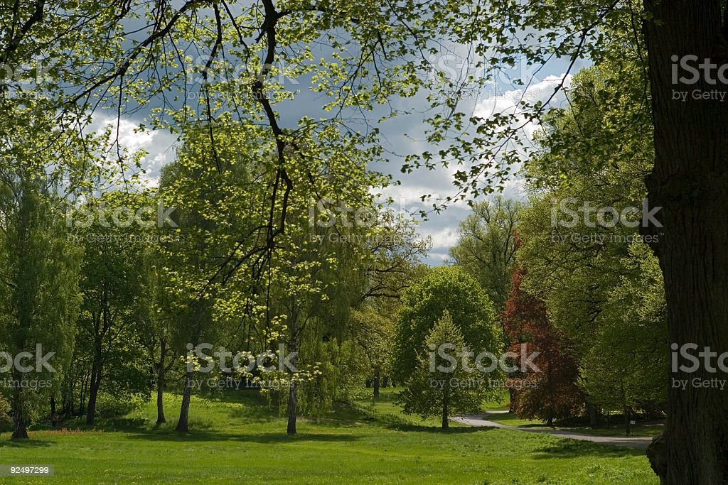 Summer in the park royalty-free stock photo