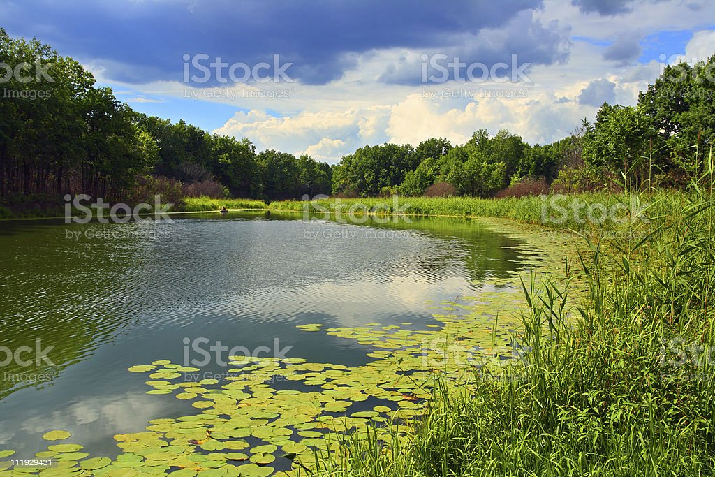 summer lake landscape royalty-free stock photo