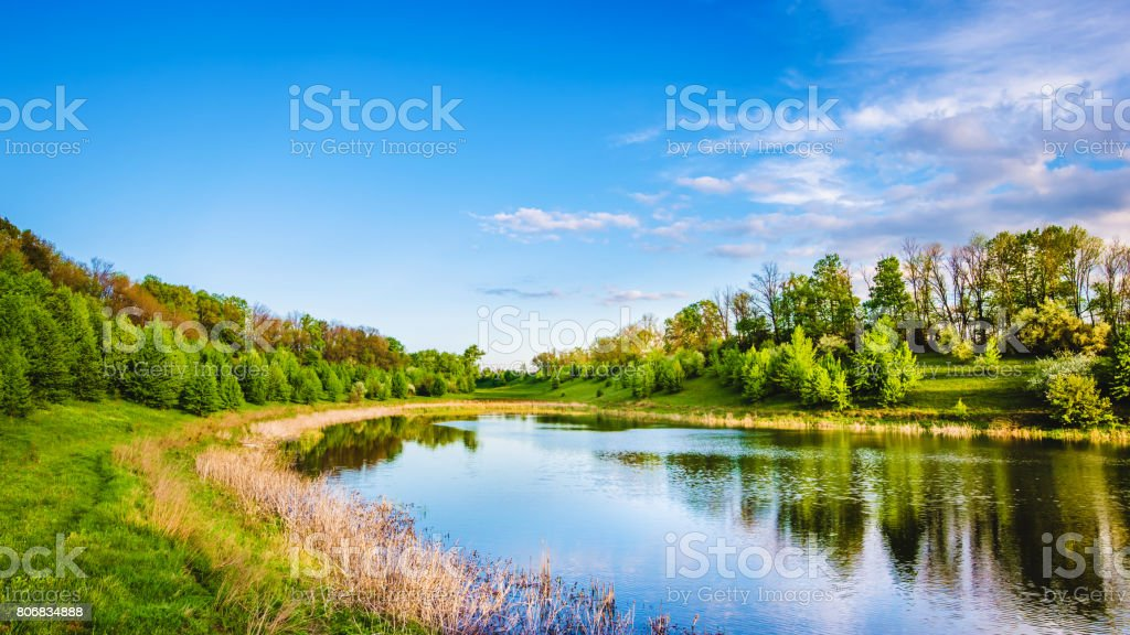 Summer lake near the forest. stock photo