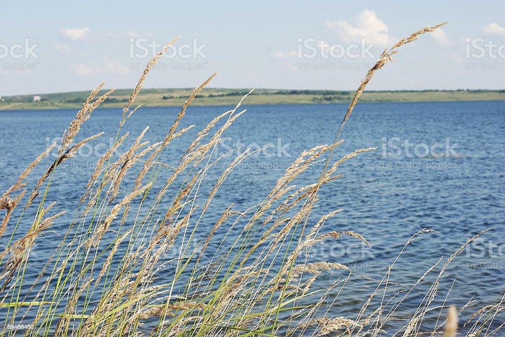 Летний Озеро Стоковые фото Стоковая фотография