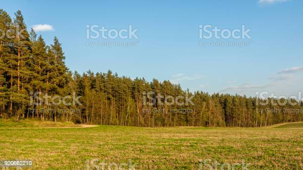 Photo of summer landscape. beautiful view from the field to the coniferous forest in the warm evening light