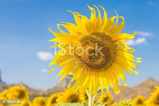 Summer landscape: beauty sunflowers in field with blue sky background