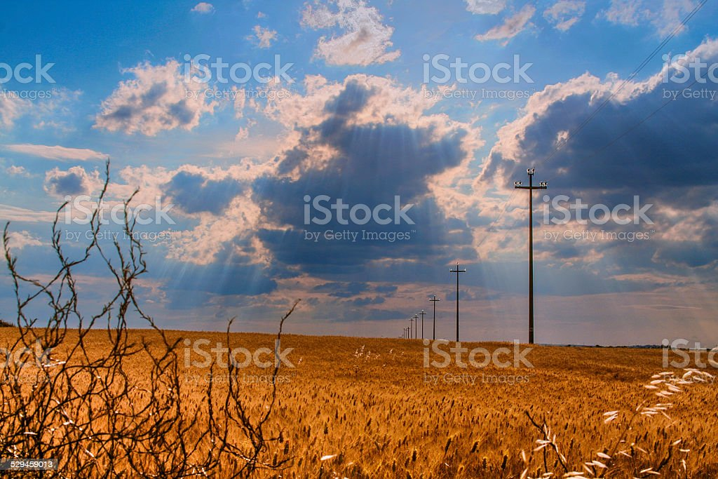 Summer landscape: field of wheat. - (Apulia) ITALY- stock photo