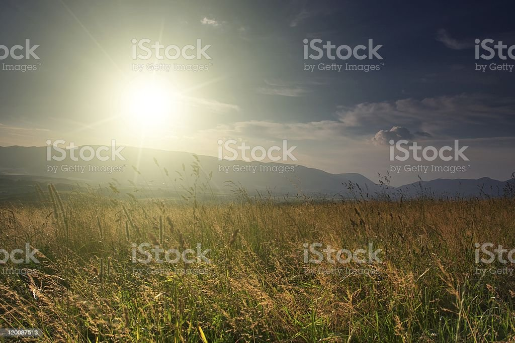 Summer landscape field with sun royalty-free stock photo