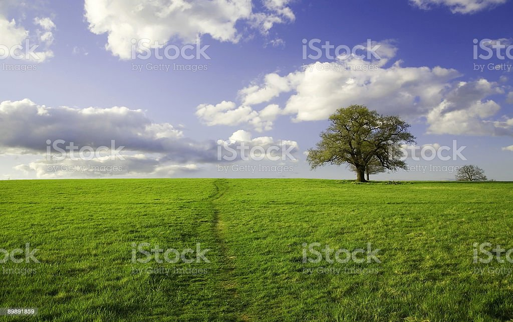 Summer landscape Green field lonely tree and the blue sky stock photo