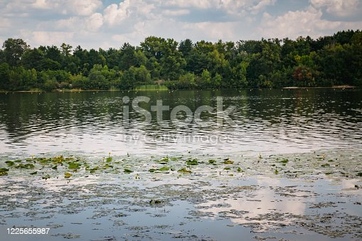 Summer landscape, green forest on the river bank with water lilies and a blue sky with clouds on a sunny clear day