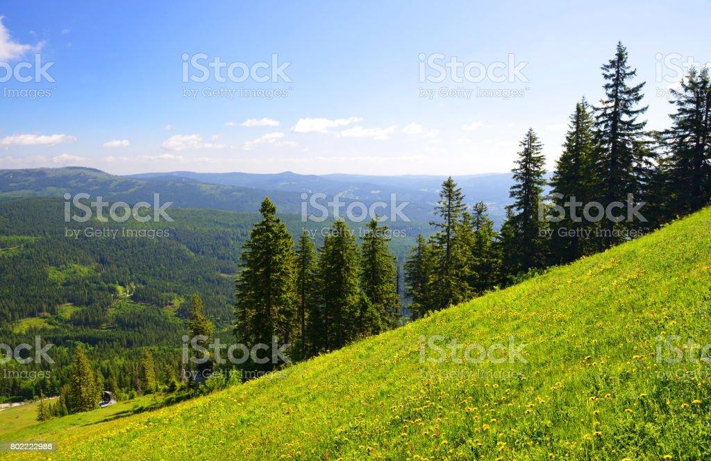 Sommer Landschaft im Nationalpark Bayerischen Wald, Deutschland. – Foto