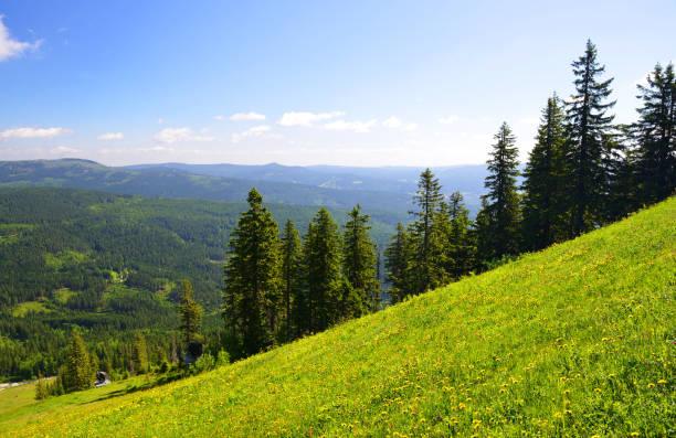 sommar landskapet i nationalparken bayerische wald, tyskland. - bayerischer wald bildbanksfoton och bilder