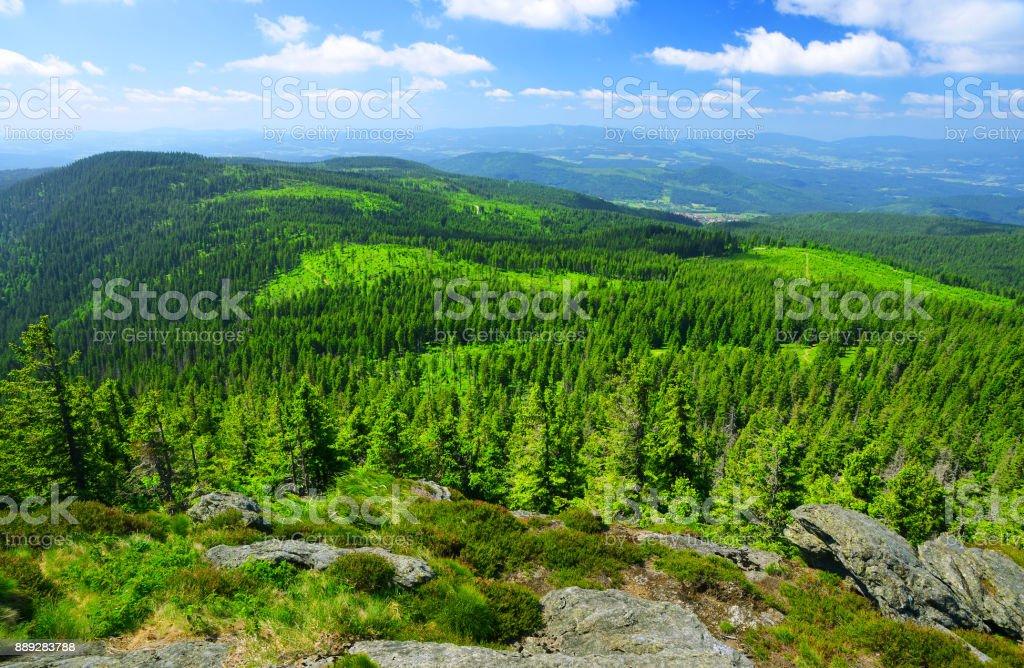 Summer landscape in National park Bayerische Wald,Germany. stock photo