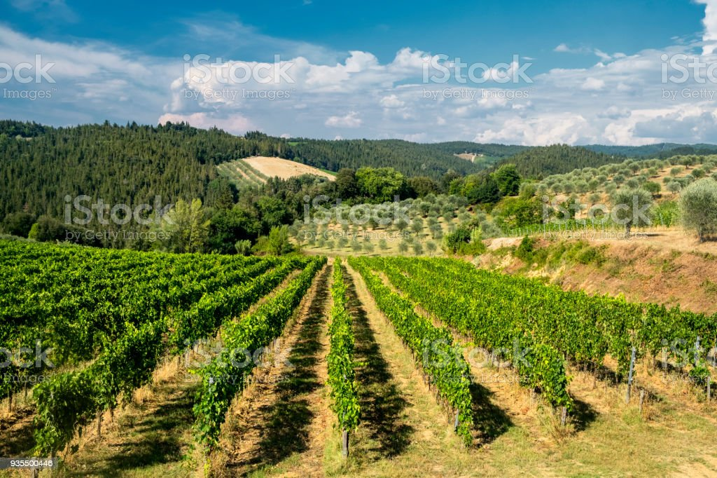 Summer landscape in the Chianti region (Tuscany) stock photo